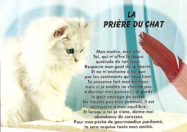 Les prières du chat  Esvb2610