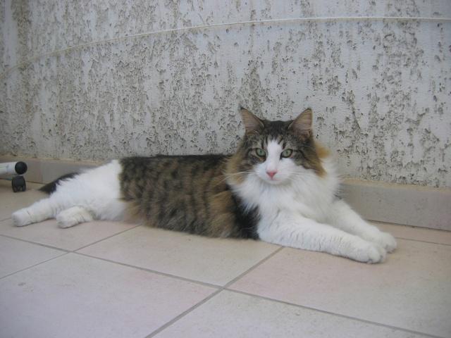 Spécials Photos : Avant/Après de nos chats Img_0011