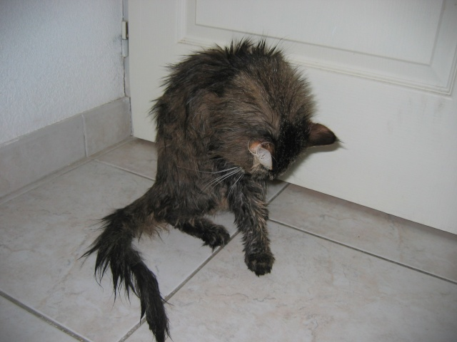 Le poids des chats Img_0024