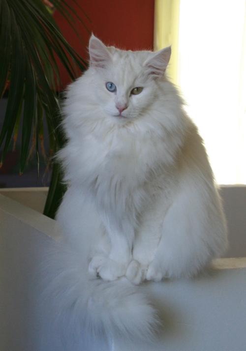 présentation de la tribu du cat sitting Img_5212