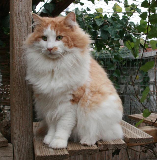 présentation de la tribu du cat sitting Img_5324