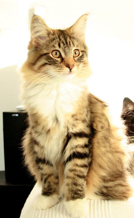 présentation de la tribu du cat sitting Img_5510