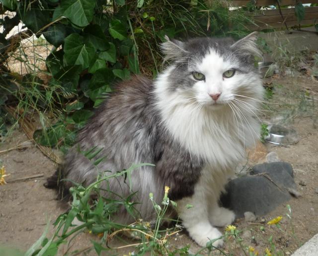 présentation de la tribu du cat sitting P1020711