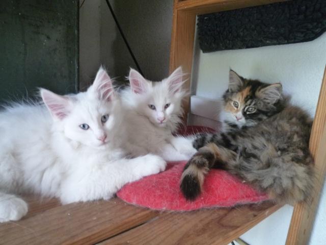 présentation de la tribu du cat sitting P1020712