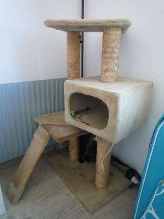 Les jouets de nos chats P1020819