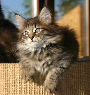 Spécials Photos : Avant/Après de nos chats Raz410