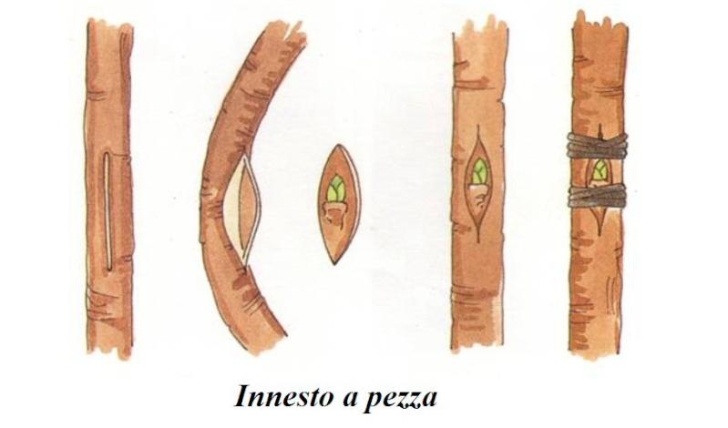 Innesti di vari generi Immagi12