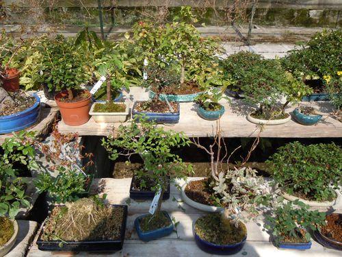 Preparazione stagionale dei bonsai Vivaio21