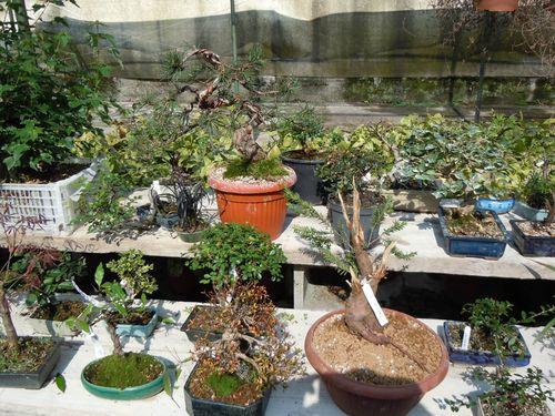 Preparazione stagionale dei bonsai Vivaio24