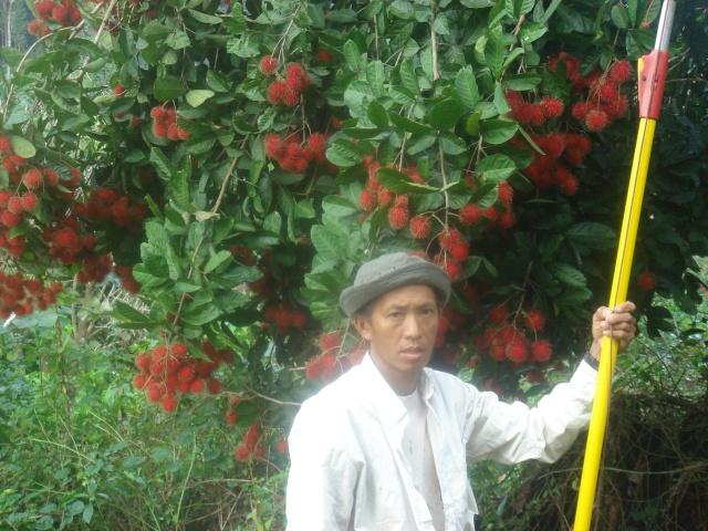 Keeb Kwm Hmoob mus nyob Guyane Dsc04724