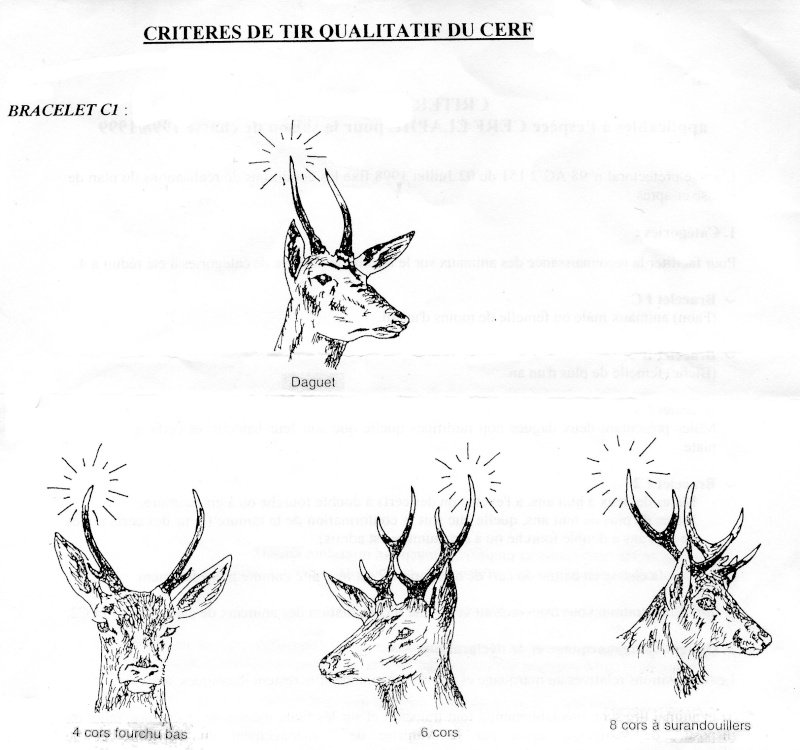 Mues de cerfs ou de chevreuils - Page 4 Cerf_c10