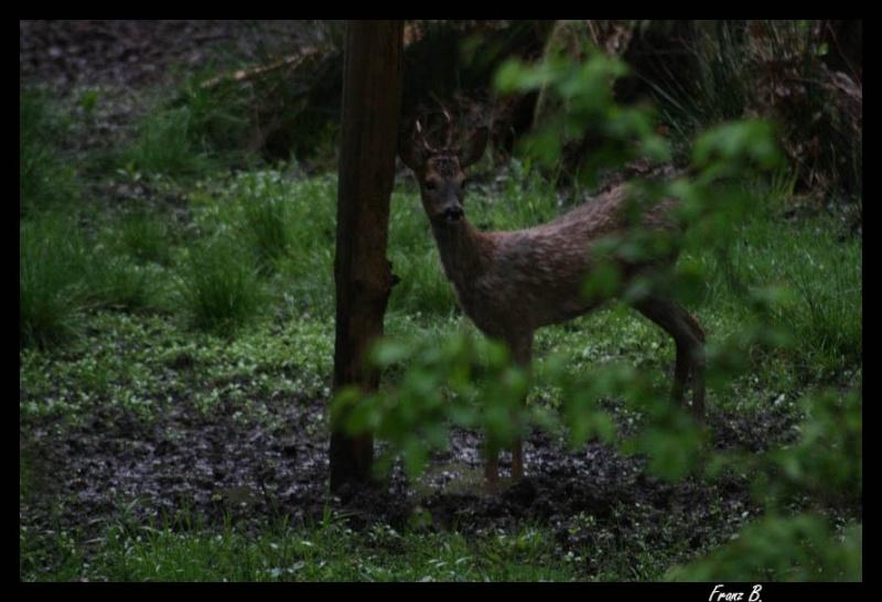 Mes sorties, Pirsch Affût  -  Saison de chasse 2010/2011 - Page 2 Img_6514