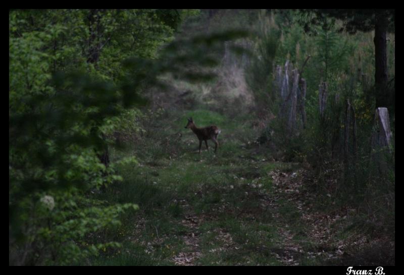 Mes sorties, Pirsch Affût  -  Saison de chasse 2010/2011 - Page 4 Img_6819