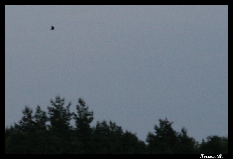 Mes sorties, Pirsch Affût  -  Saison de chasse 2010/2011 - Page 4 Img_6822
