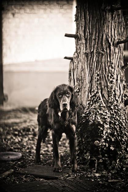 Un portrait qui a ..du chien Triste12