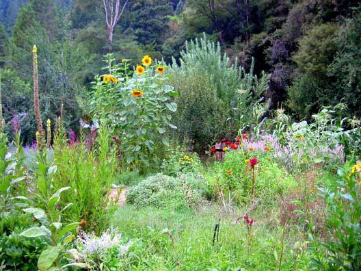 """nouveau """"jardinage"""" : recréer un nouvel écosystème Permac10"""