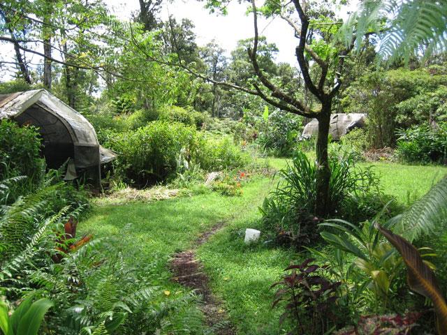 """nouveau """"jardinage"""" : recréer un nouvel écosystème Permac11"""