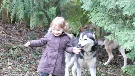 Les Loups du 51 adoptés grâce à vous... P1050211
