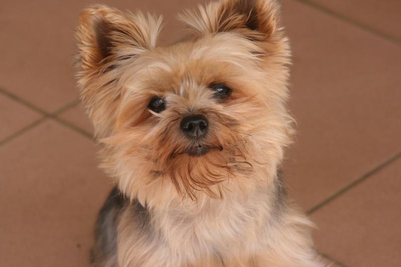 Fil sur les animaux domestiques (chiens, chats, oiseaux, etc.) Img_0010