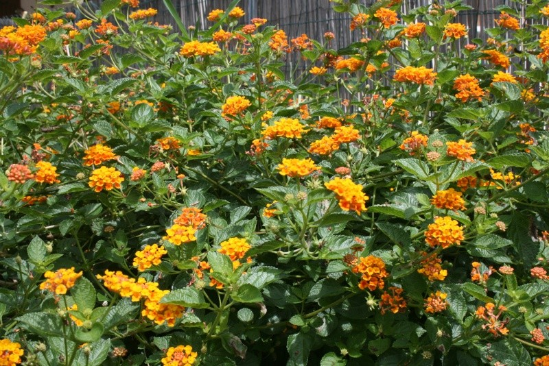 Les Fleurs Img_2913