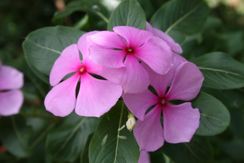 Les Fleurs Img_2916