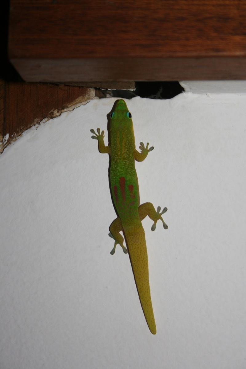 Mayotte... l'île au lagon Img_3110