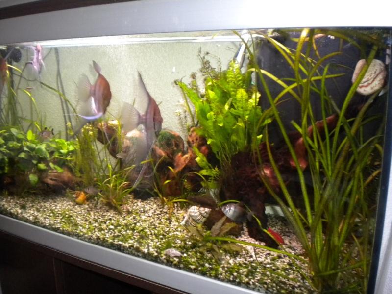 mes  aquariums de 100 et 200 litres Dscn0810