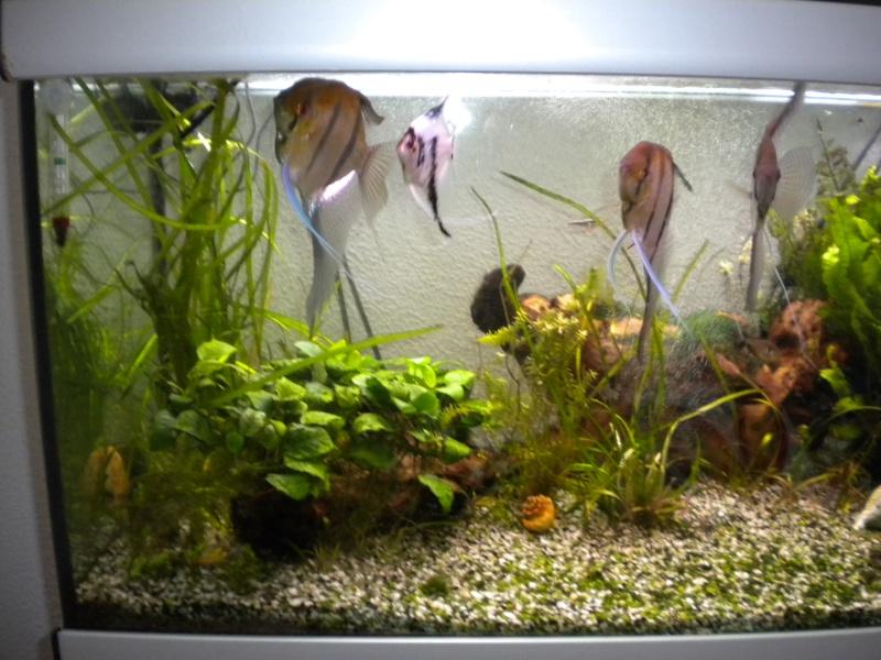 mes  aquariums de 100 et 200 litres Dscn0811