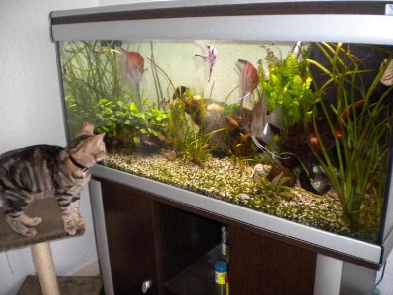 mes  aquariums de 100 et 200 litres Dscn0812