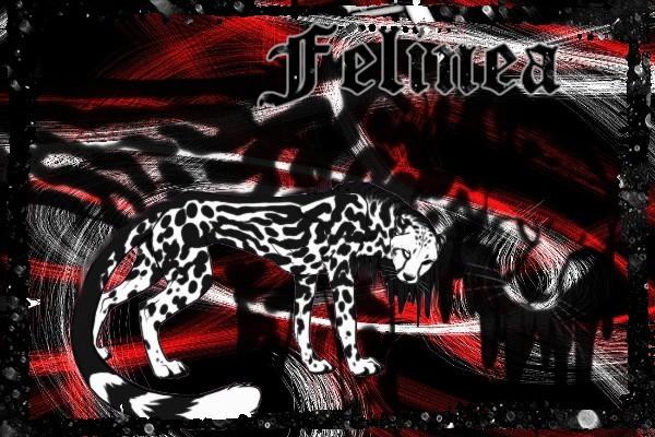 Feli's Créa !! Feline15