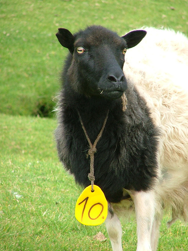 collection de moutons - Page 2 11855010
