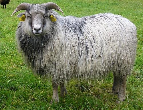collection de moutons - Page 2 14781410