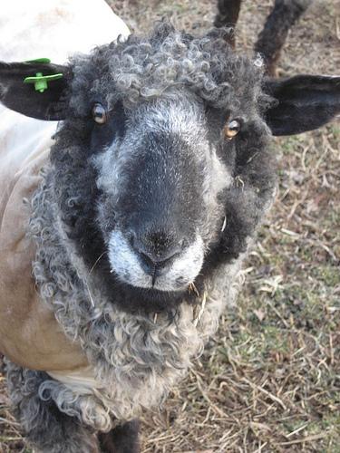 collection de moutons - Page 2 22698110