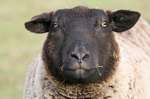 collection de moutons - Page 2 22839110
