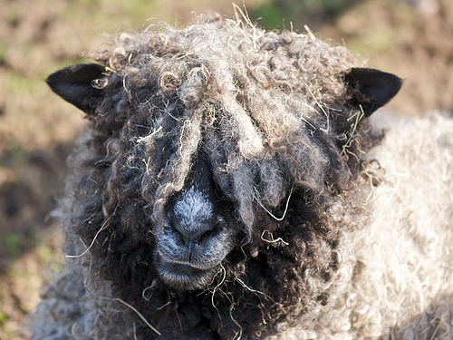 collection de moutons - Page 2 25345710