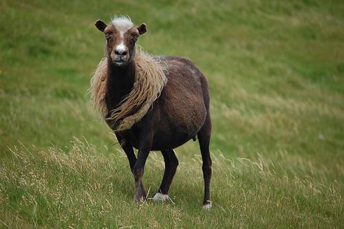 collection de moutons - Page 2 27193010