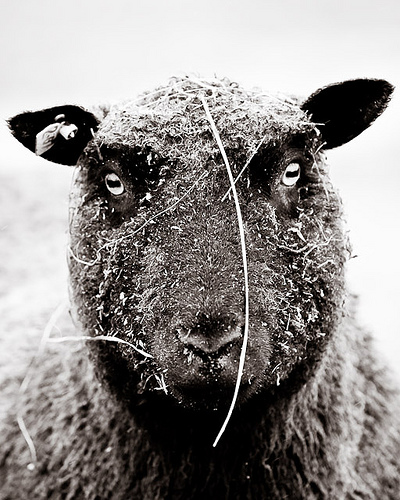 collection de moutons - Page 2 35023210