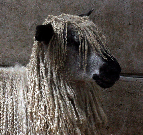 collection de moutons - Page 2 36868610