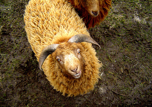 collection de moutons - Page 2 64755010