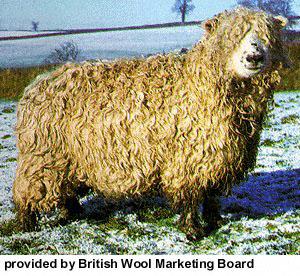 collection de moutons - Page 2 Dartmo10