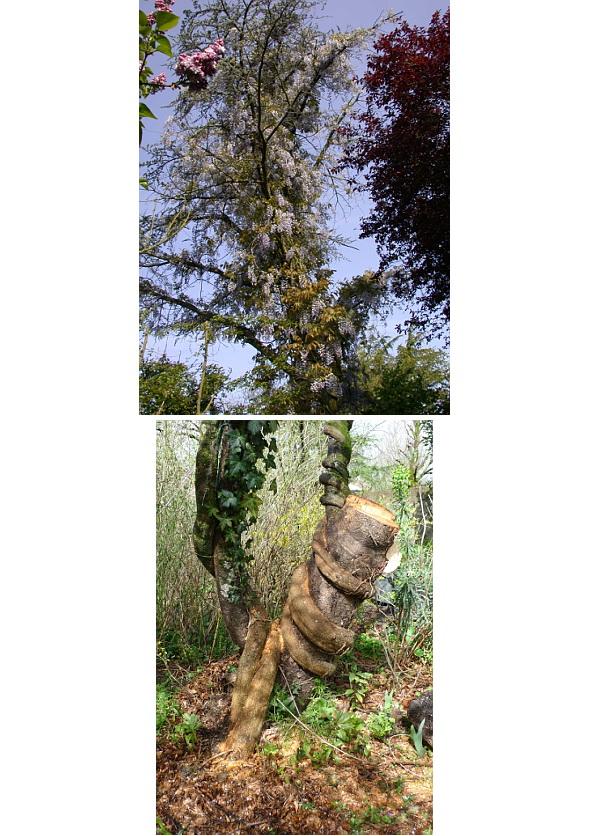 Sculptures naturelles ou œuvres de la nature - Page 2 Glycin10