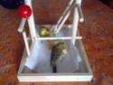 La primera cría de canario de este año me la encontré tiesa a los 13 días de vida Canari16