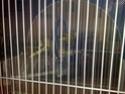 La primera cría de canario de este año me la encontré tiesa a los 13 días de vida Doscan10