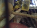 La primera cría de canario de este año me la encontré tiesa a los 13 días de vida Espejo10