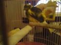 La primera cría de canario de este año me la encontré tiesa a los 13 días de vida Espejo13