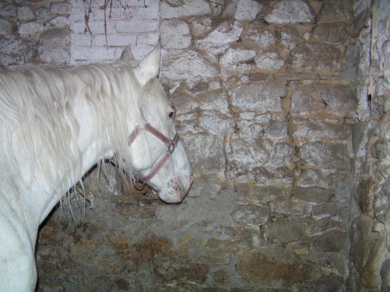 FLORINEIGE jument grise née en 1993 - adoptée en février 2010 Florin11