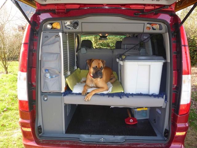 Ou voyage votre chien ? Place_11