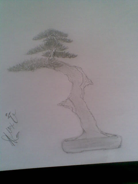 Mugo Pine Needs A New Look Image117