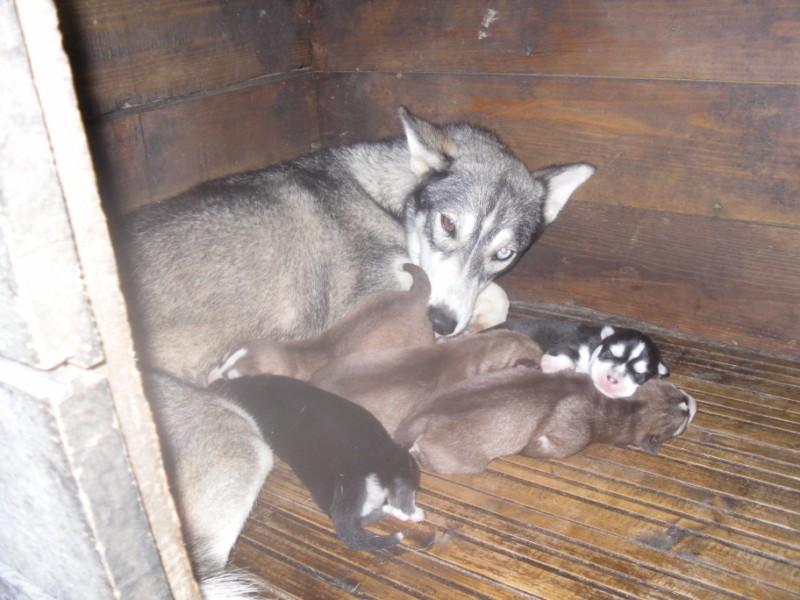 Nos loups grandissent, postez nous vos photos - Page 4 1_160010