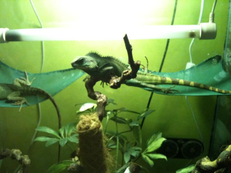 mes reptiles Pour_a14